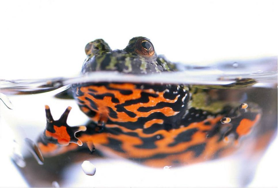 frog-in-water